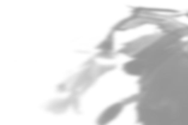 Fond d'ombre de plante d'été. ombre de la fleur de zygocactus sur le mur blanc. blanc et noir pour superposer une photo ou une maquette.