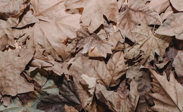 Fond orange coloré de feuilles d'érable sec marron. d'en haut