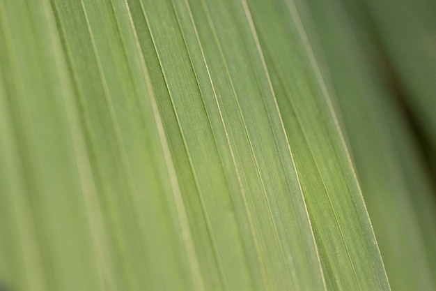 Fond organique avec des feuilles