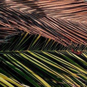Fond de palmier. art tropical minimal