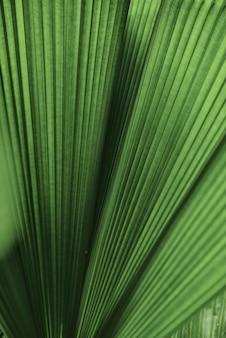 Fond de palmier feuille ébouriffé