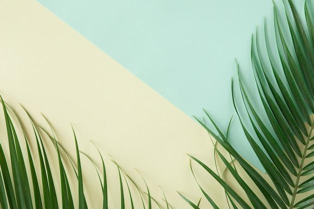 Fond de palmiers tropicaux. mise en page créative faite de feuilles tropicales vertes sur fond bleu et jaune. frontière minimale, concept de plat d'été avec espace copie