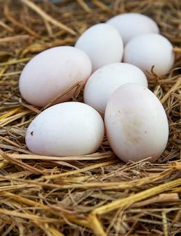 Fond de pâques, oeufs de poule blancs