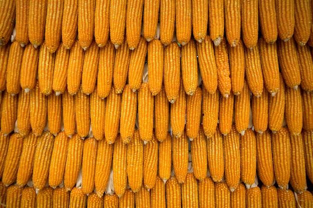 Fond de paquet de maïs séché jaune