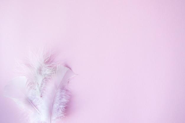 Fond de pastels rose tendre, mariage, anniversaire, thème de la saint-valentin avec des plumes blanches pour l'espace de copie.