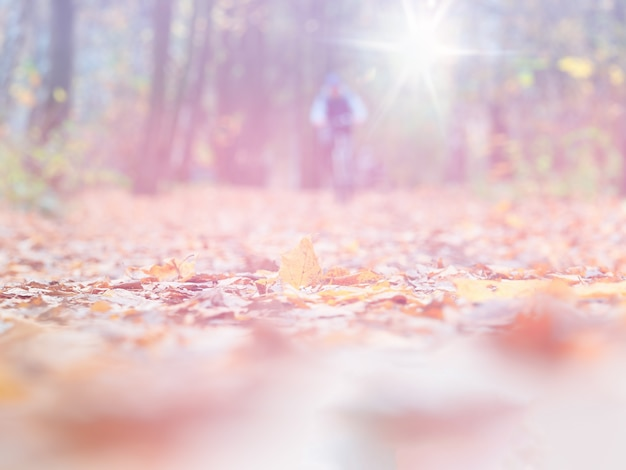 Fond de paysage de bokeh d'activité de vélo de sport d'automne