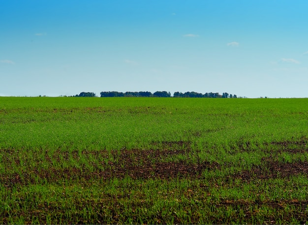 Fond de paysage de champ de ferme vert dramatique