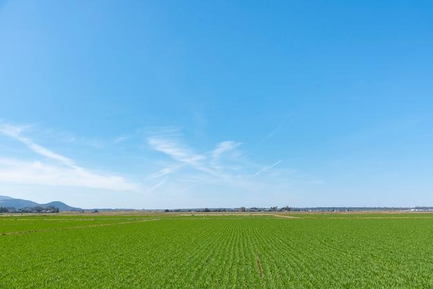 Fond de paysage pour l'été, ciel bleu et beau nuage