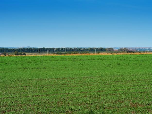Fond de paysage de prairie écologique dramatique