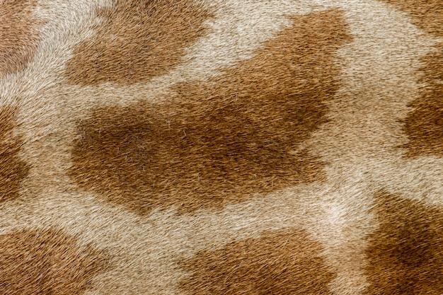 Fond de peau de girafe