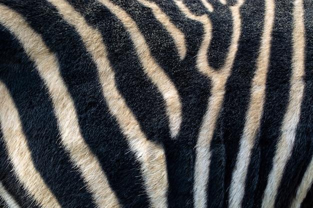 Fond de peau de zèbre rayé, noir et blanc