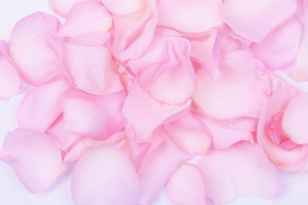 Fond de pétales de roses roses