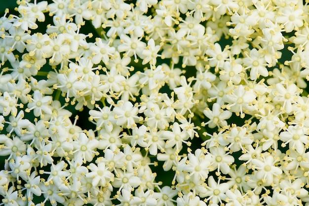 Fond de petites fleurs blanches.