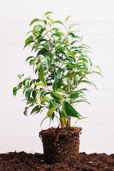 Fond de la plante