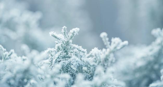 Fond avec des plantes gelées couvertes de givre