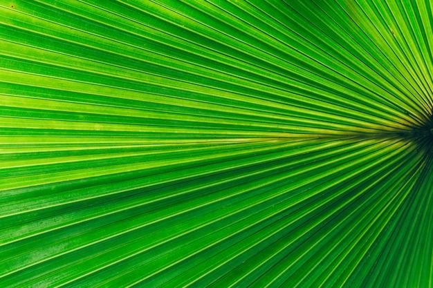 Fond de plantes de la jungle. fourrés et arbustes tropicaux dans la jungle.