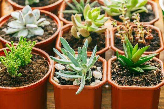 Fond de plantes succulentes à la floraison.