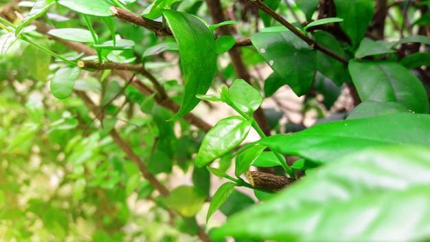 Fond de plantes vertes naturelles