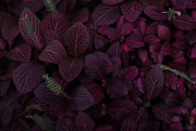 Fond de plantes violettes lumineuses
