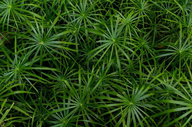 Fond plein cadre de feuilles de palmier vert