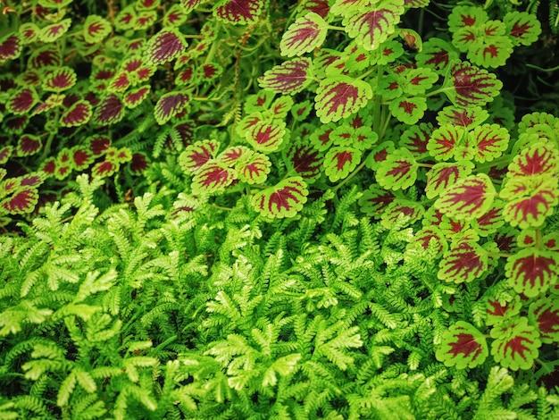 Fond plein cadre de fougère et plante avec motif de feuille brune