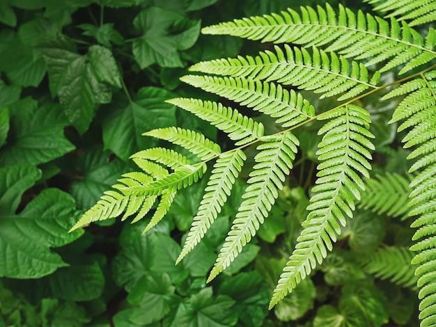 Fond plein cadre de plantes et de fougères vertes fraîches