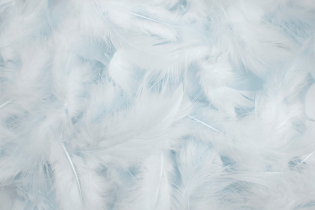 Fond de plumes blanches.