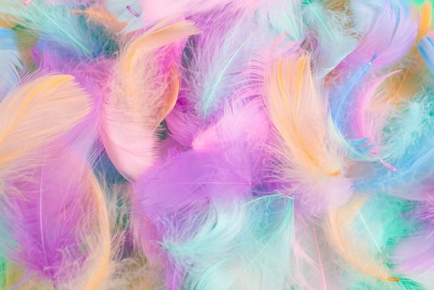 Fond de plumes colorées, vue de dessus.