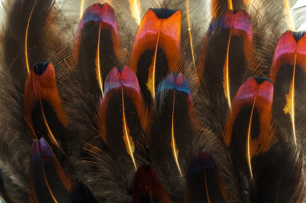 Fond de plumes marron