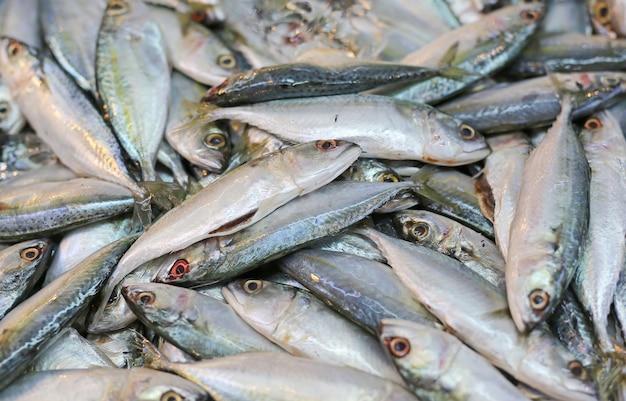 Fond de poisson maquereau frais