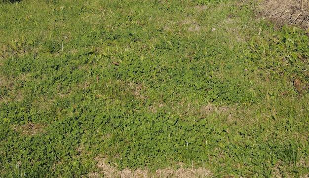 Fond de prairie verte