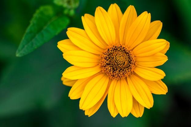 Fond de printemps avec de belles fleurs jaunes.