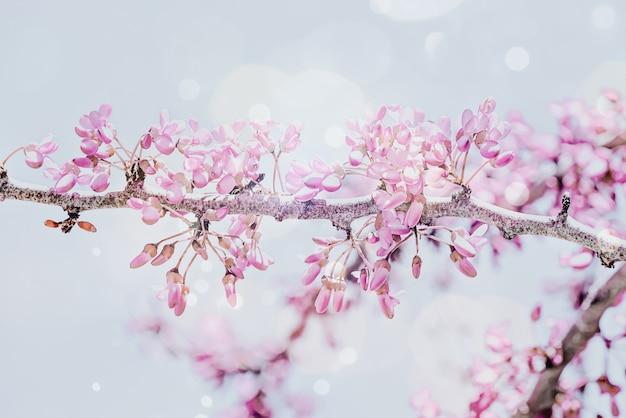 Fond de printemps avec une branche de fleur rose de cerise. belle scène de nature