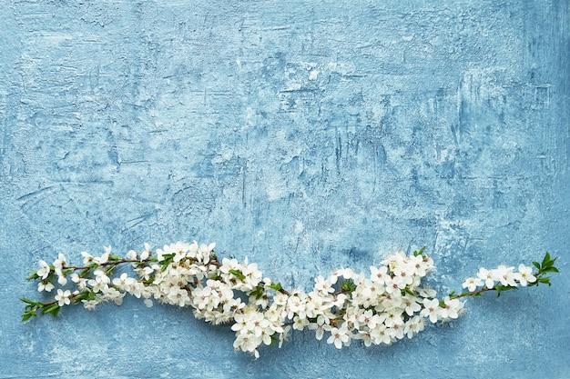 Fond de printemps. branche fleurie de pruniers sur fond bleu. espace de copie, vue de dessus.