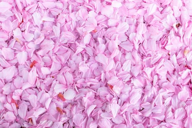 Fond de printemps naturel avec des pétales roses d'une fleur de cerisier. pétales dans la rue.