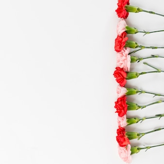 Fond de printemps avec des roses