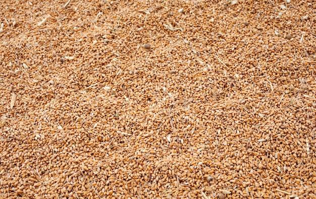 Fond de récolte de blé
