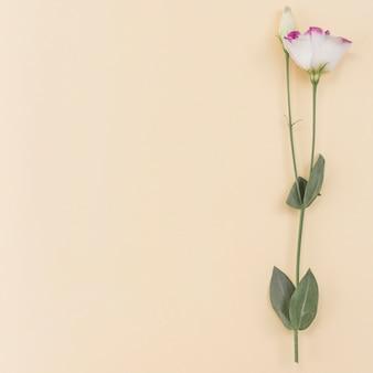 Fond romantique avec fleur