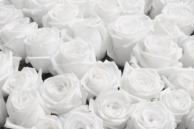 Fond de rose blanche, faire-part de mariage roses blanches