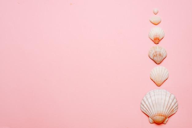 Sur un fond rose disposés des coquillages