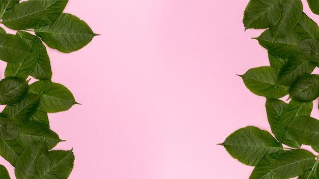 Fond rose avec des feuilles botaniques décoratives