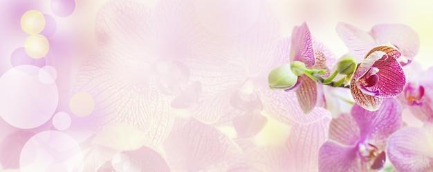 Fond rose avec des fleurs d'orchidées