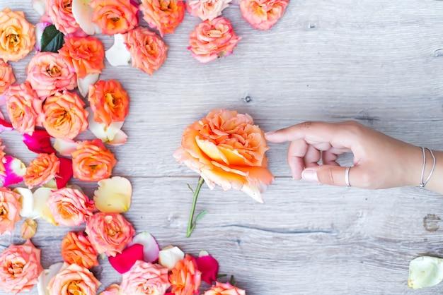 Fond de roses colorées avec une main de femme