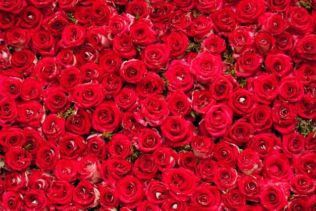 Fond de roses rouges, modèle pour la conception de mariage