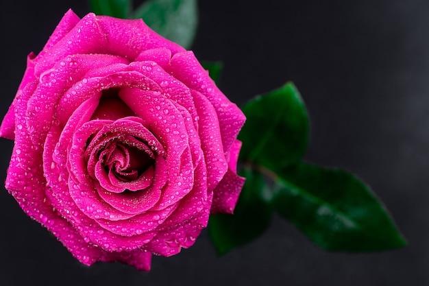 Fond de roses rouges naturelles.