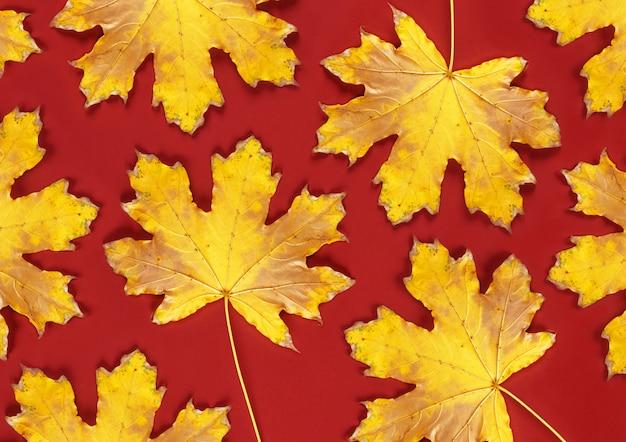 Fond rouge avec des feuilles d'érable jaunes sèches