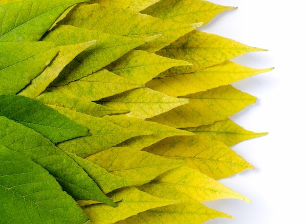 Fond de saison d'automne avec des feuilles brillantes colorées du vert au jaune.