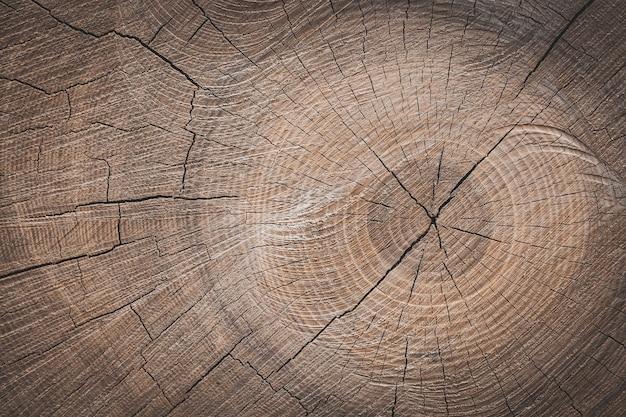 Un fond d'une souche en bois