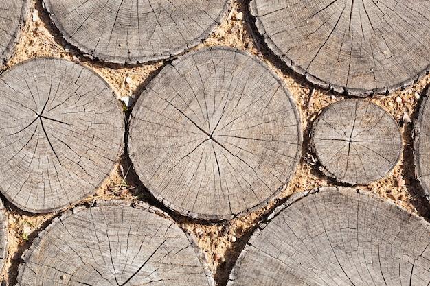 Fond de souches d'arbres arbres coupés section texture du bois de tronc d'arbre mignon. tranches dans le sable
