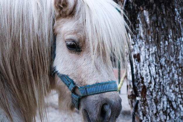 Fond studio créature equus crinière